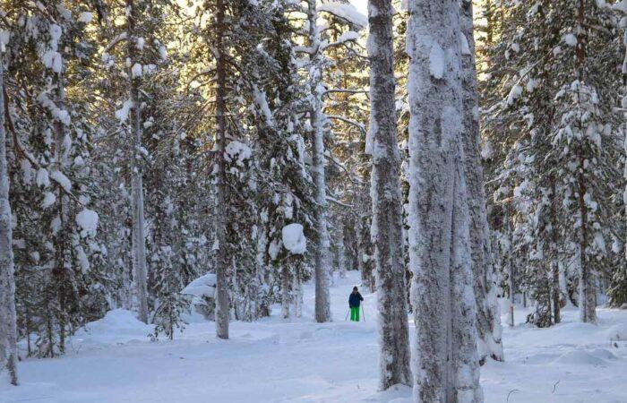 Viaggi organizzati Finlandia - foresta