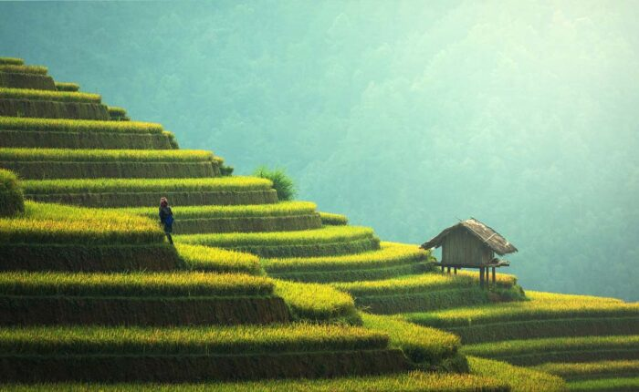 Viaggio in Vietnam - agricoltura