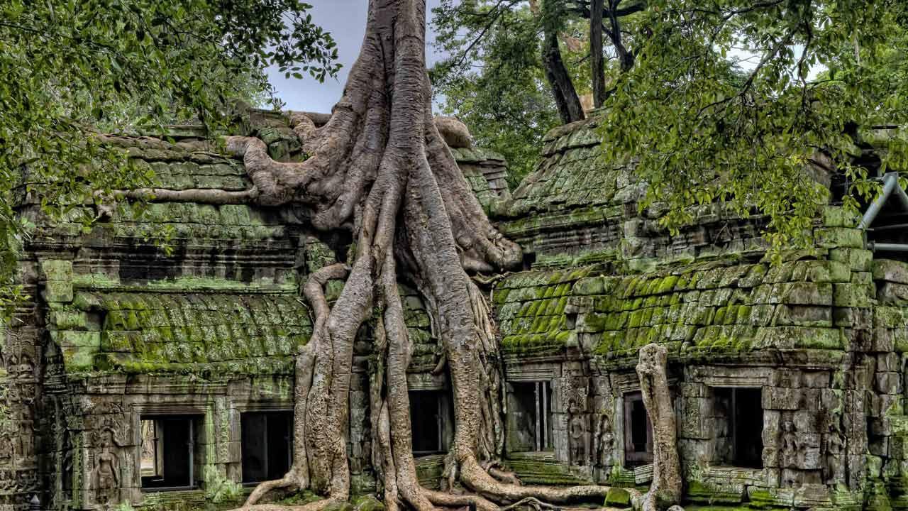 Viaggio in Cambogia - tempio-ta-prohm