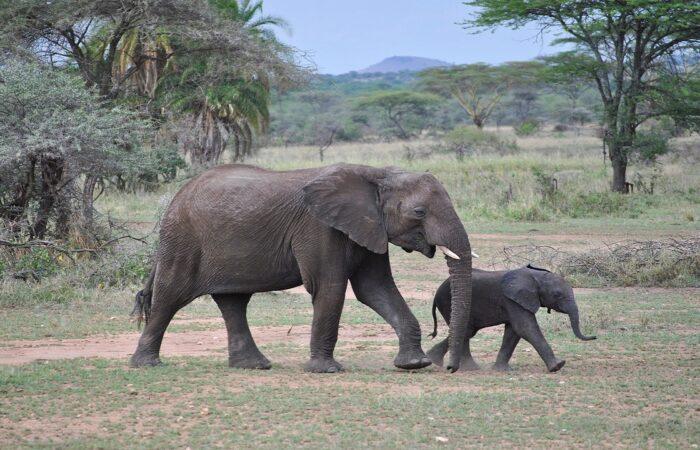 viaggi organizzati tanzania