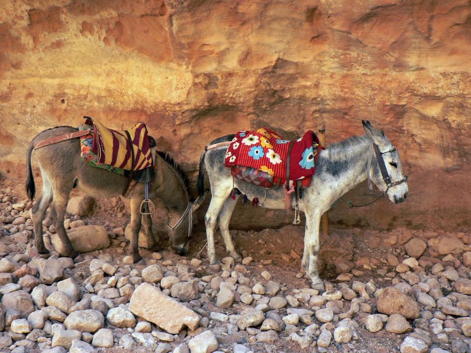 Tour giordania - Petra