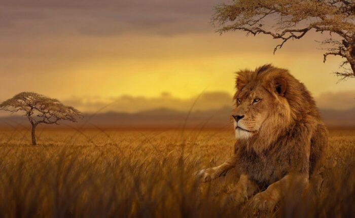 Tour Sudafrica - leone