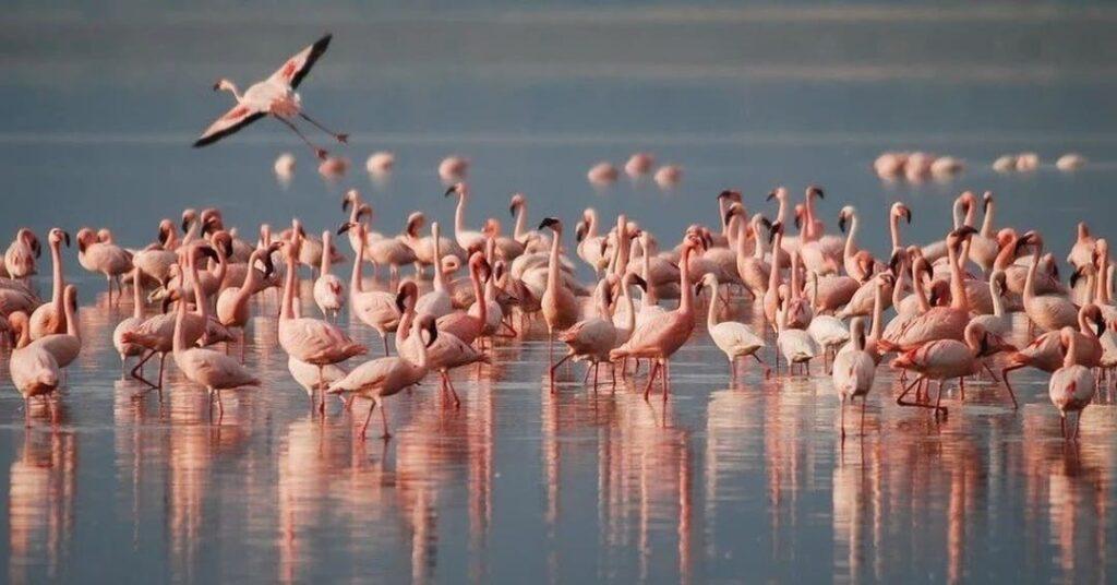 Sardegna fauna e uccelli
