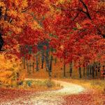 trekking foreste casentinesi - foliage d'autunno