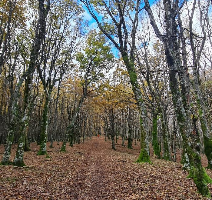 Foliage in Italia e passeggiate fotografiche